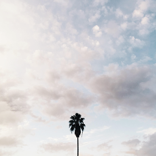 lonely palm | almost makes perfect