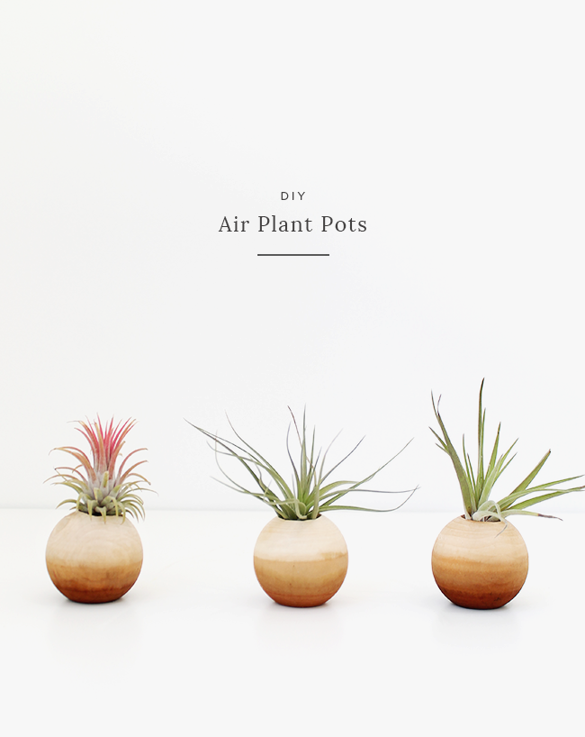 DIY air plant pots | almost makes perfect